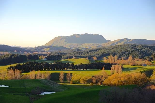 NZ_画像