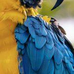 ブリスベンのユニークな鳥達