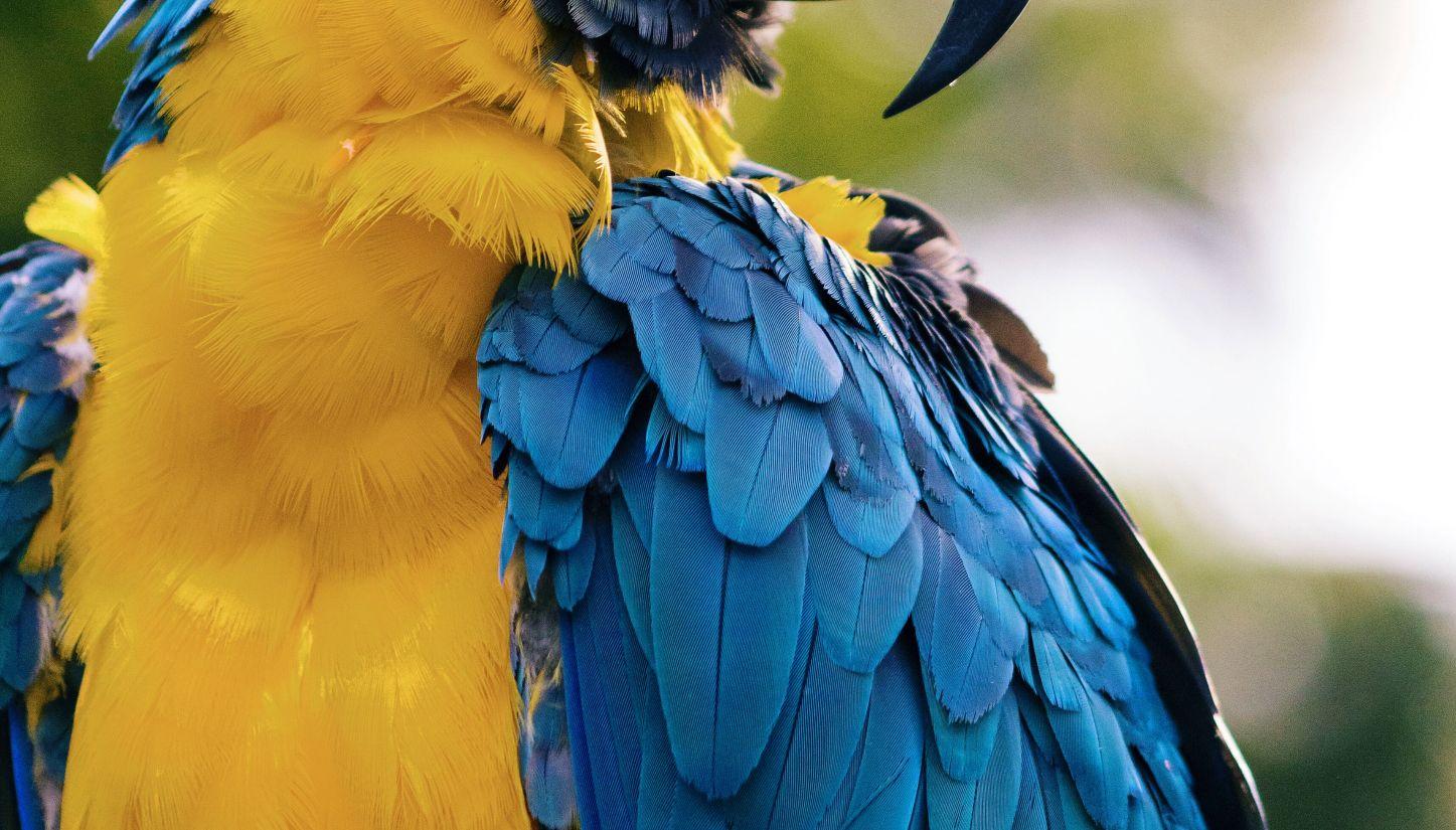 鳴く 鳥 英語 が