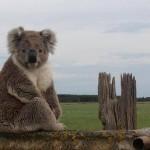 オーストラリア、どこの州に留学すべき?