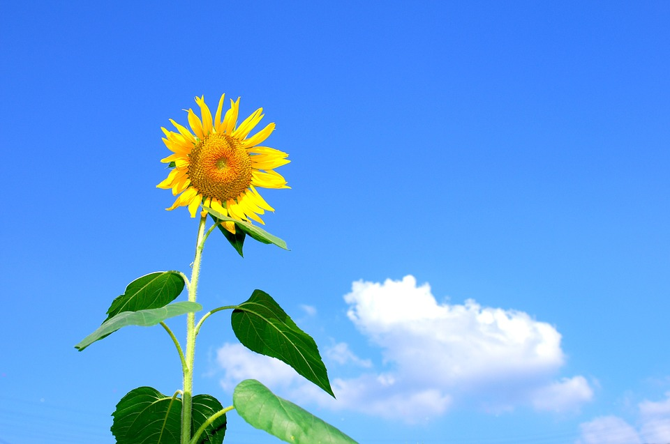 image_summertime1