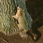 コアラやユーカリだけじゃない!オーストラリアのキュートな動物・植物って?